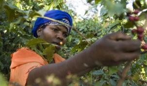 Na sajmu SCA World of Coffee u Berlinu udruženje International Coffee Partners razgovarat će s uzgajivačima kave o rješenjima za izazove s kojima se suočavaju