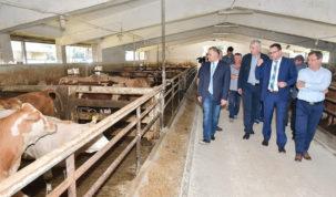 18 milijuna kuna za rekonstrukciju farme junadi Šumbar