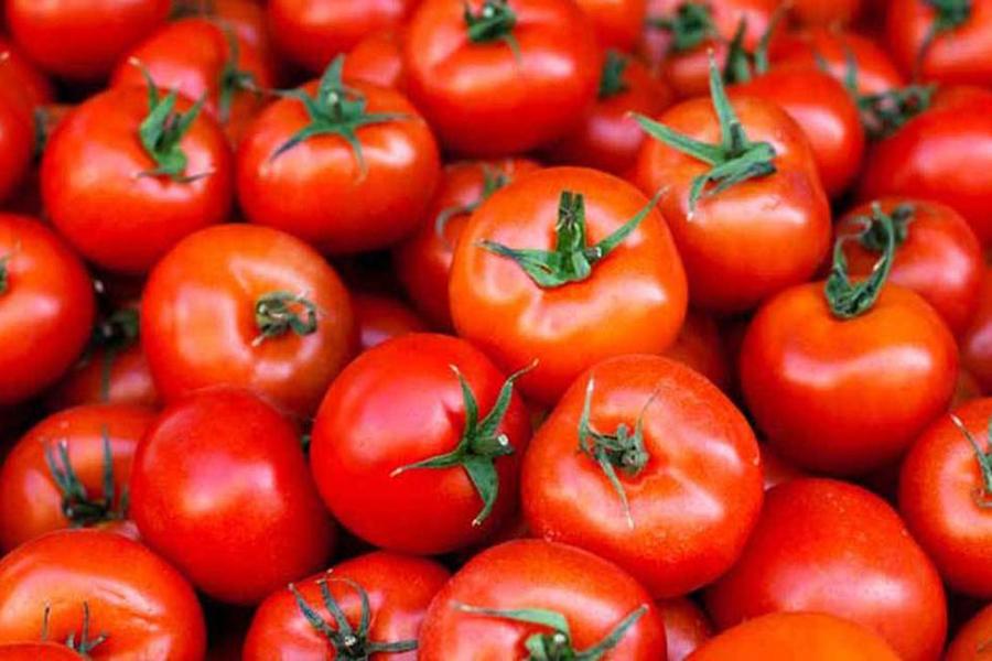 Domaću rajčicu