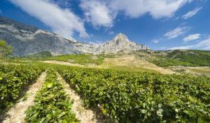 U METRO-u potražite nove vinske etikete renomirane vinarije Zlatan otok