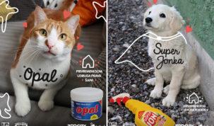 Prijatelji životinja i Čarli nastavljaju kampanju za udomljavanje napuštenih životinja