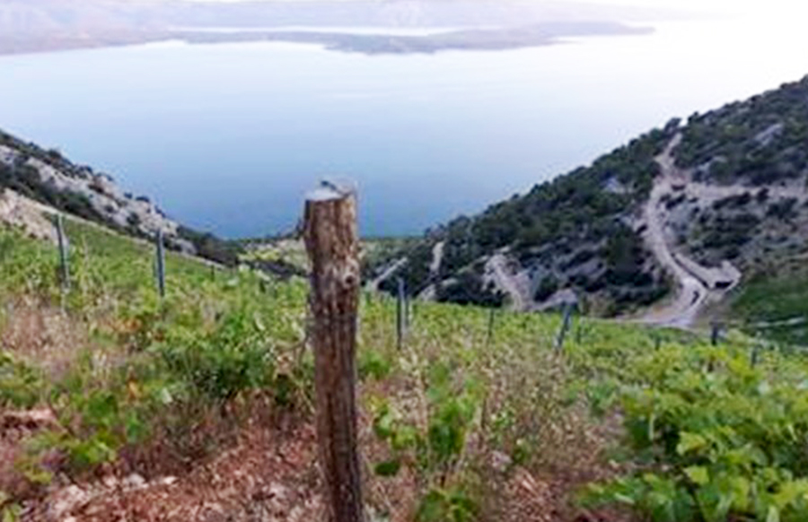 Iter Vitis konferencija u Motovunu - turizam i vino ne idu jedan bez drugoga